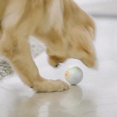 ペットの遊び相手になってくれるボール型ロボット「KOKOMI(ココミ)」