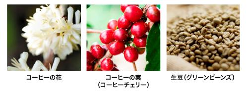 花、実、生豆