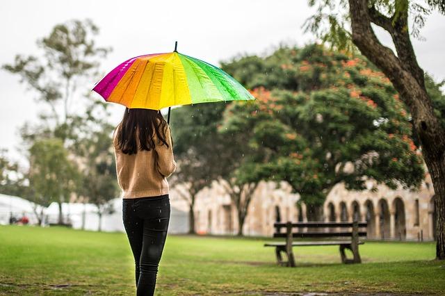 お気に入りの傘の写真