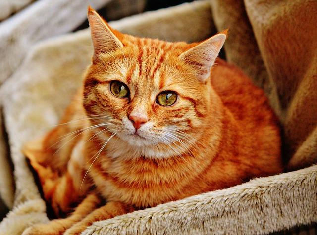毛布が敷かれたカゴの中にいる猫の写真