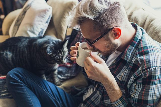 ソファに座るネコと飼い主