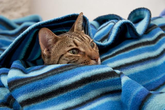 毛布と猫の写真