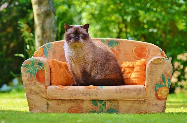 猫とソファの写真