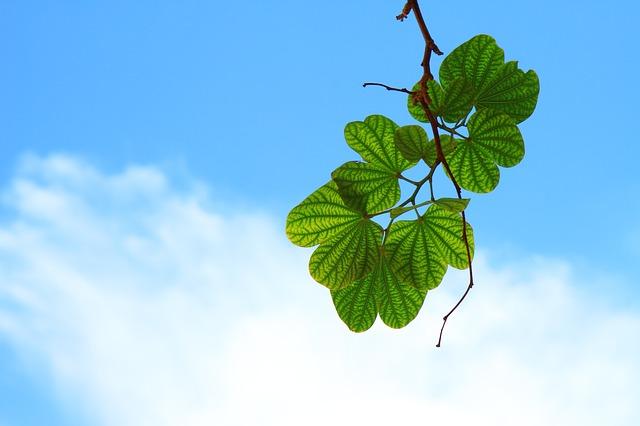 青空と葉っぱの写真