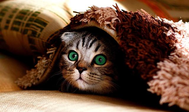 猫も居心地が良いこたつ