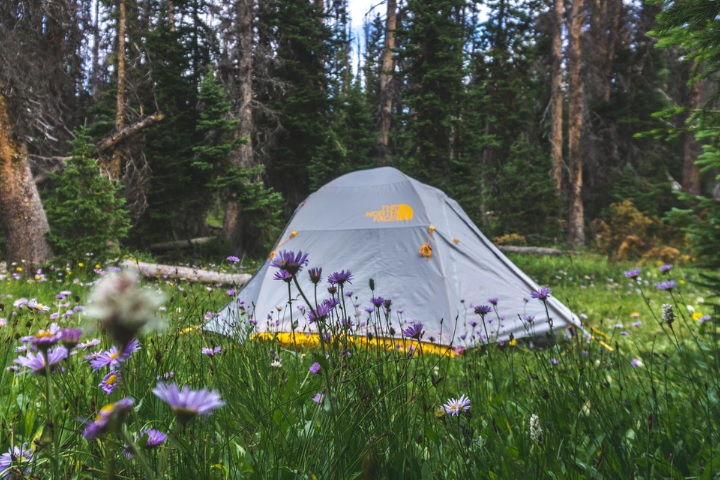 春キャンプの画像