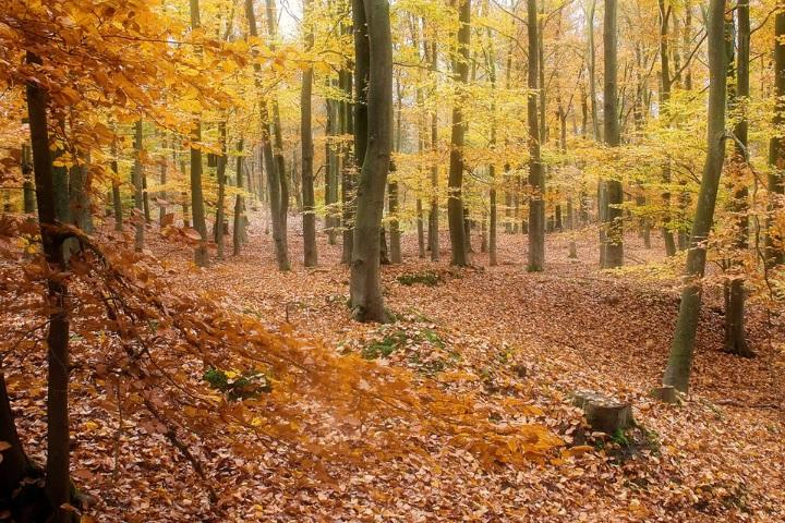 秋の山の画像