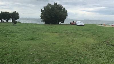 丸山県民サンビーチの芝生サイト
