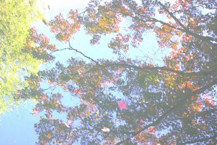 アートフィルターで撮影した木と青空