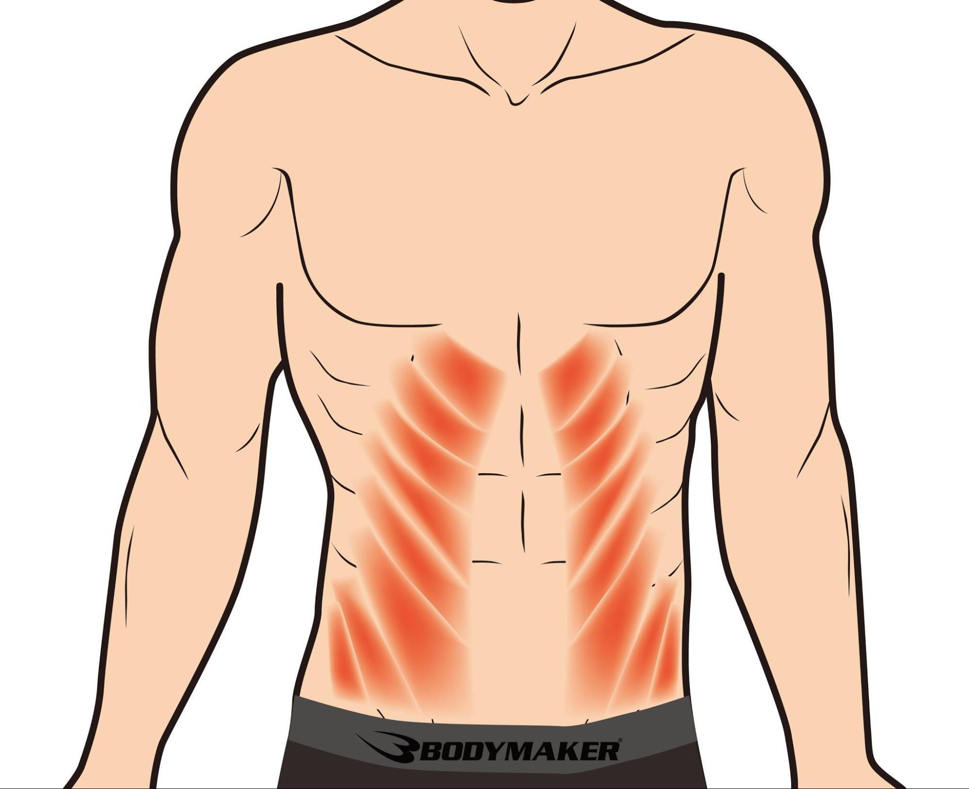 外腹斜筋のイメージ図