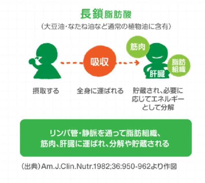 中鎖脂肪酸と長鎖脂肪酸の代謝経路の違い