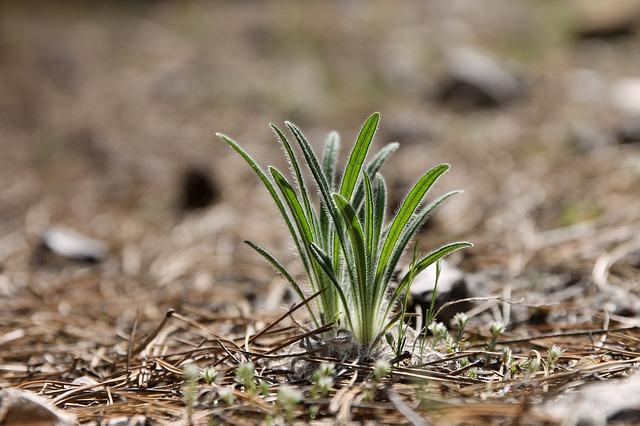 土からのびる草の写真
