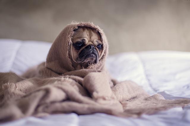 ベッドで温まる犬の写真