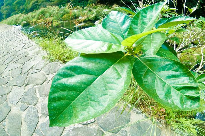 葉っぱの写真 撮影:ライター南谷有美