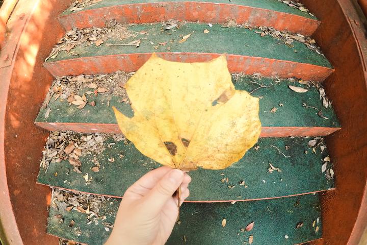 落ち葉の写真 撮影:ライター南谷有美