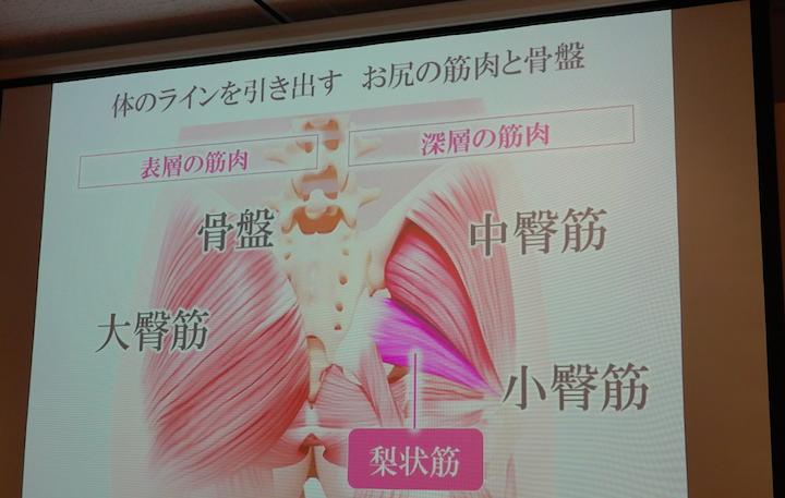 パナソニック骨盤おしりリフレがマッサージできる骨盤周りの筋肉画像