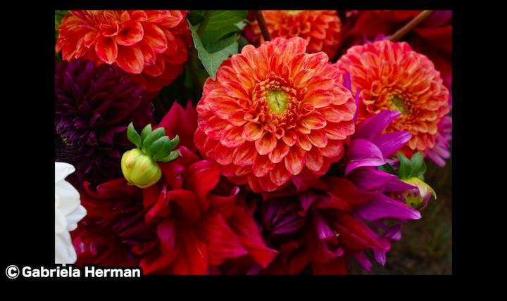ニコンZ50で撮影した花の写真からわかる解像度の高さ