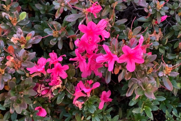 iPhone Xで撮影した花の写真