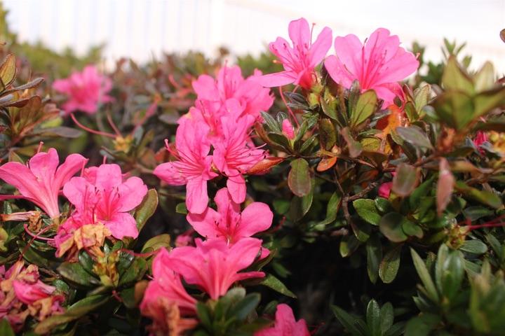 Canon EOS Kiss X7で撮影した花の写真