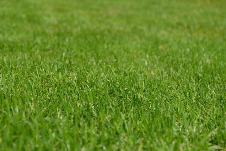 おすすめ 人工 芝 【プロが解説】人工芝3種類の素材とその特徴とは?おすすめの素材も公開!