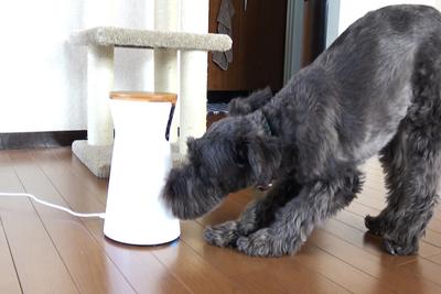 おやつもあげられる!愛犬を見守るドッグカメラ『Furbo(ファーボ)』