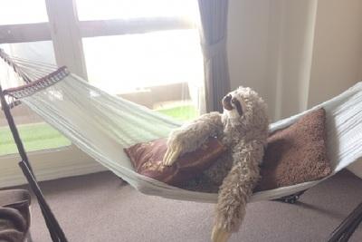 ハンモックスタンドで快眠を得る!その魅力的な効果とは