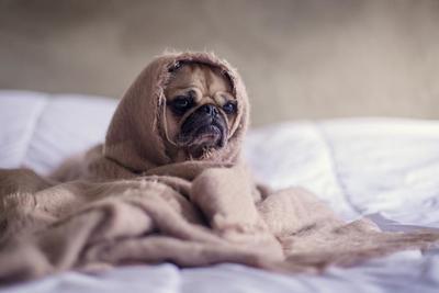 人気の犬グッズのおすすめ商品10選!愛犬との生活がもっと楽しくなる