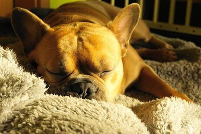 おすすめいびきグッズ10選で快適睡眠を得よう!原因についても紹介