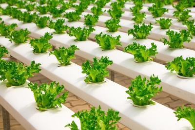 水耕栽培キットのおすすめ10選!選び方のポイントは?
