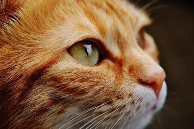 猫砂の選び方のポイント3つと飼い主と猫が喜ぶおすすめの猫砂10選