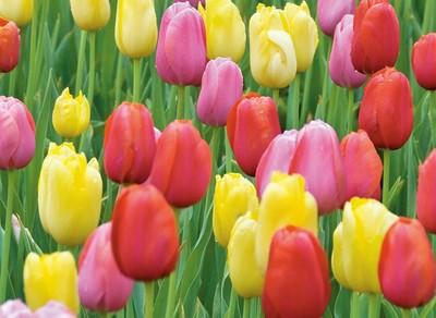 冬のガーデニング 寒い季節に育てる花オススメ9選