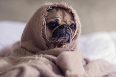 おすすめの犬用ベッドを愛犬にプレゼントしよう!選び方や種類を詳しく解説!