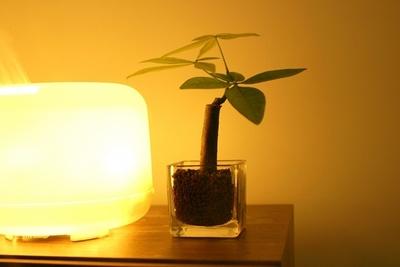 アロマランプで部屋を癒しの空間にしよう!おすすめランプ10選